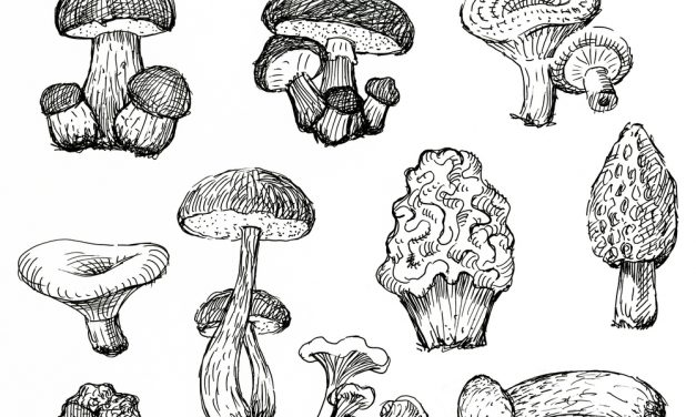 7 Medicinal Mushrooms to Include in Your Diet