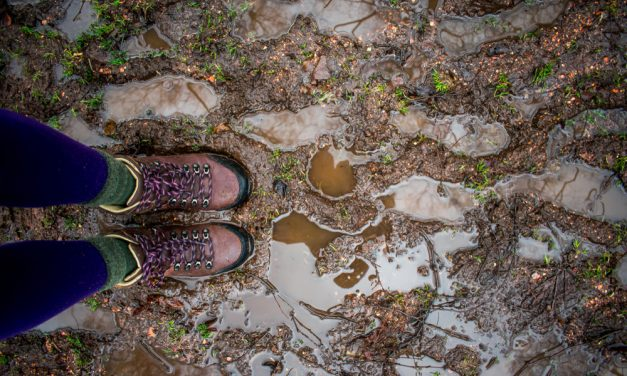 A Rain-soaked Adventure in the Boosmansbos Wilderness Area_web