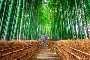 Bamboo clothing _web