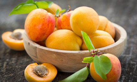 Beauty Spotlight on Apricot Kernel Oil