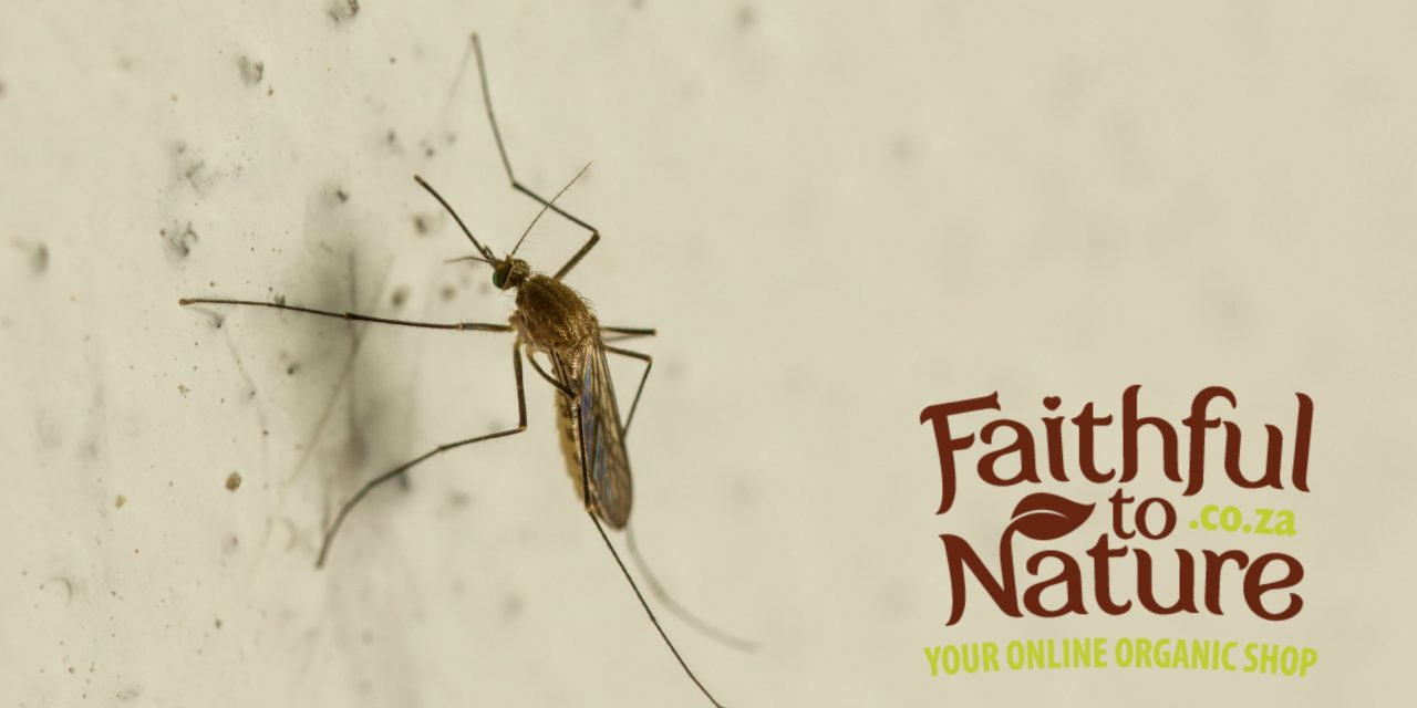 Banish Bugs – Make Your Own DIY Mosquito Repellent