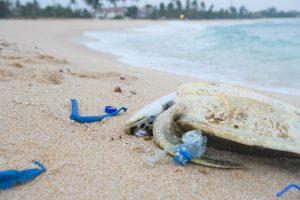 Dead sea turle_plastic_web