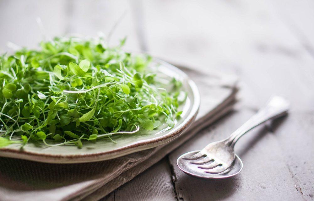 Delicious Healthy Micro Green Recipes