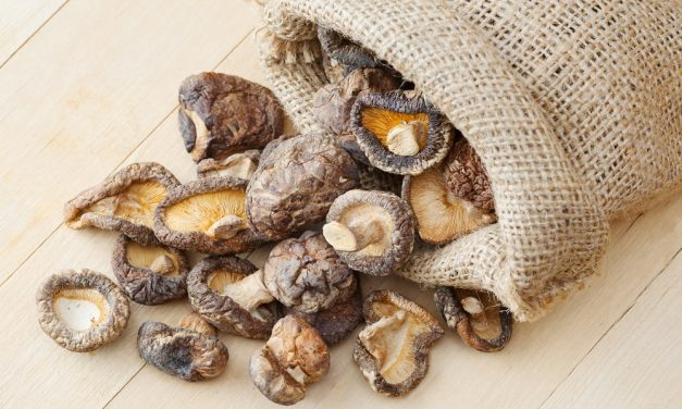 The Marvels of Medicinal Mushrooms