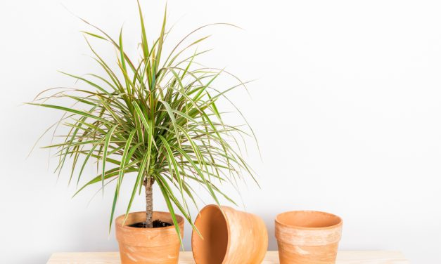 House Plants For Your Health