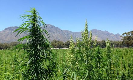 Q&A with Hemporium co-founder Tony Budden on the legalisation of personal marijuana use and the future of hemp in SA
