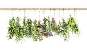 Herbs 2_web