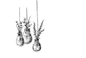 Herbs_web