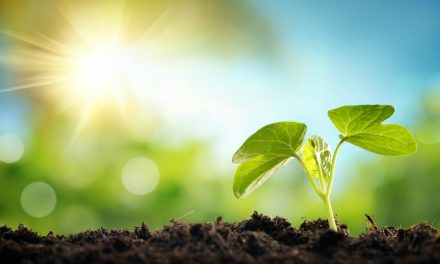 House Plants That Detoxify The Air