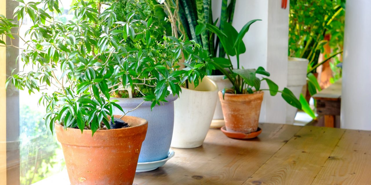 Indoor Plants That Detoxify The Air