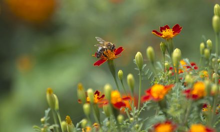 How to Fill Your Garden With Birds, Bees and Butterflies