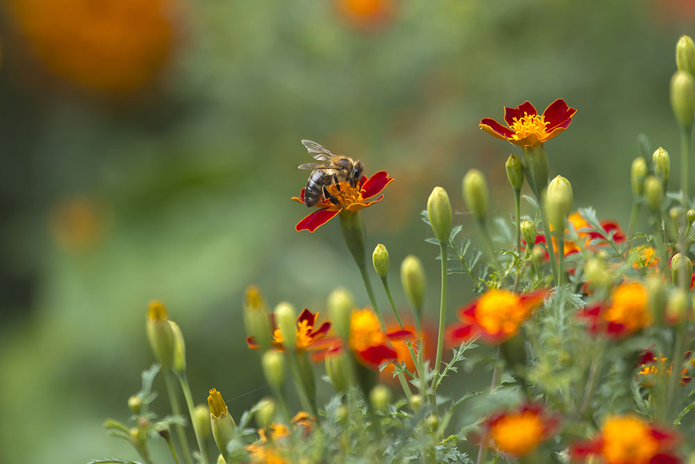 How-to-Fill-Your-Garden-With-Birds,-Bees-and-Butterflies