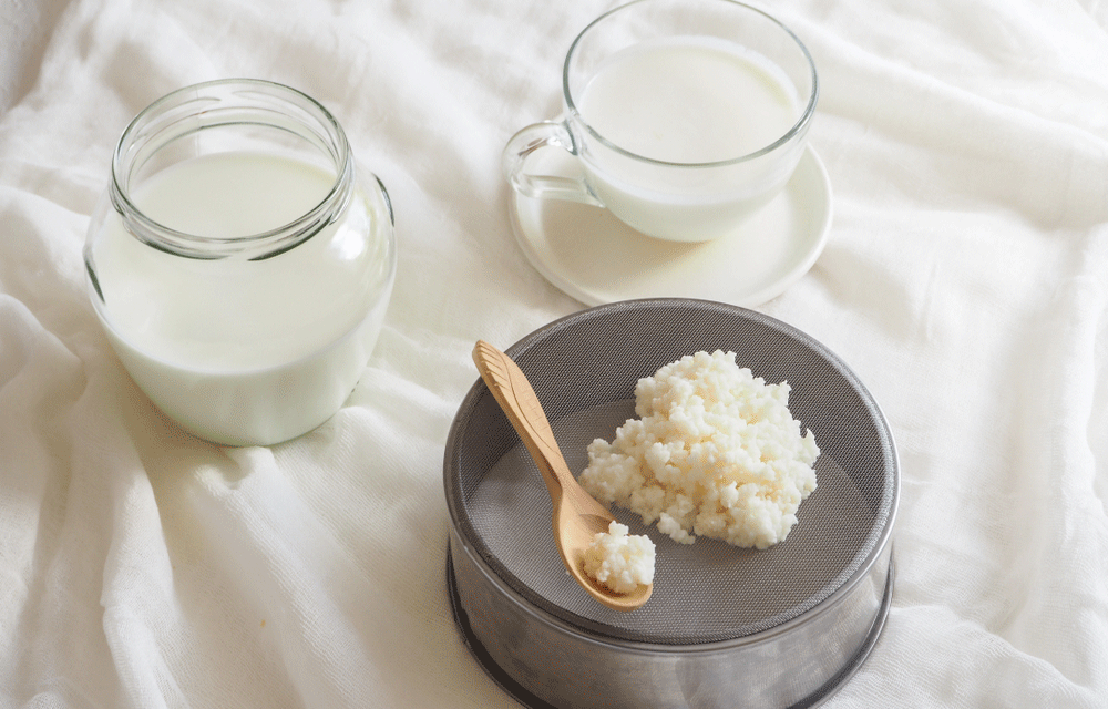 Make Your Own Kefir – The Probiotic Drink Your Gut Will Love
