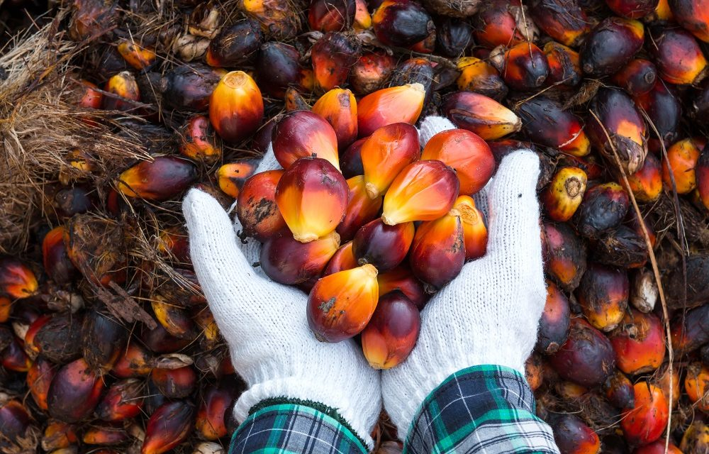 The Palm Oil Debate: Should Palm Oil Products Be Labelled Vegan or Not?