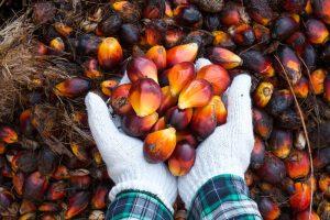 Palm Oil_web