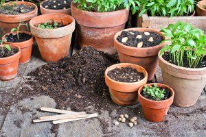 Veggies-in-pots_web