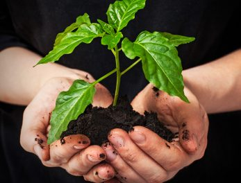Plant your Favourite Indigenous Tree for SA Arbour Week 2013