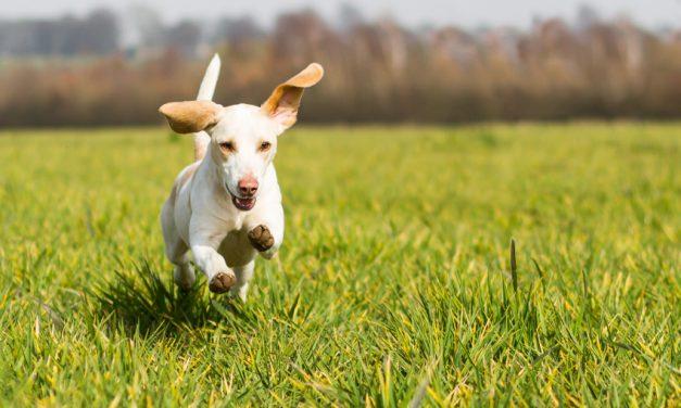 Four Fab Organic Pet Care Tips