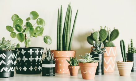 5 House Plants That Will Purify Your Home (And Are Easy to Care For)!