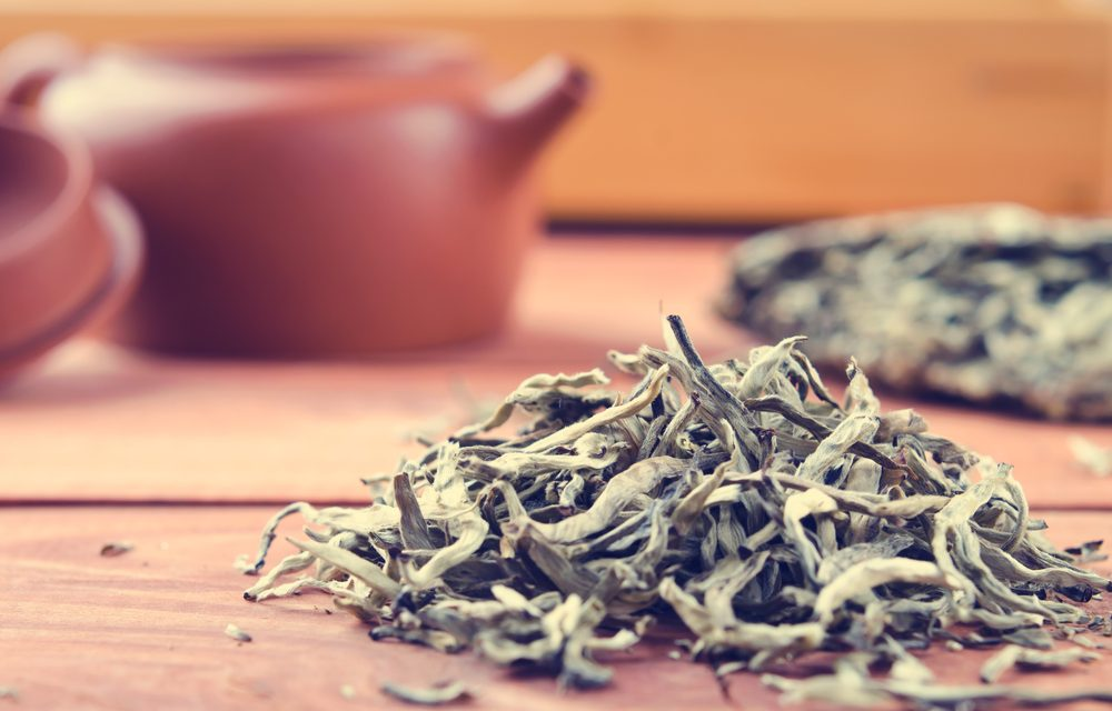 Do You Know Why White Tea is the Mightiest Of Them All?