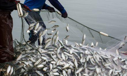 Should We still Eat Seafood?