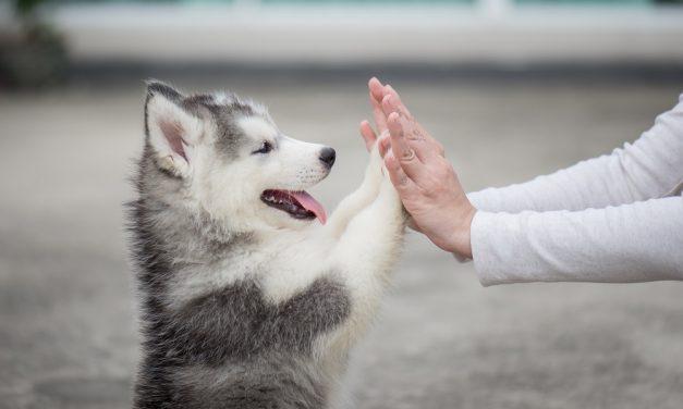 Solving Your Pet's Skin Allergies