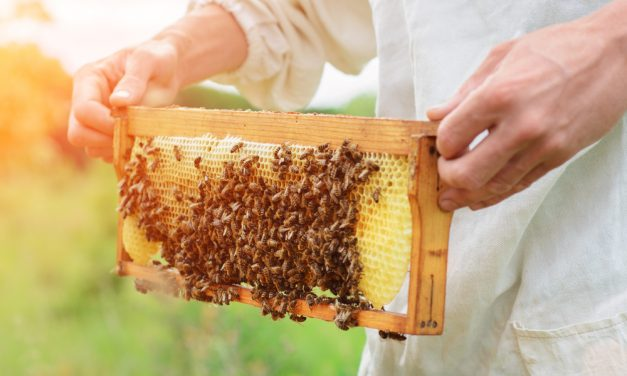 Honey: The Bee's Knees or a Sticky Issue?