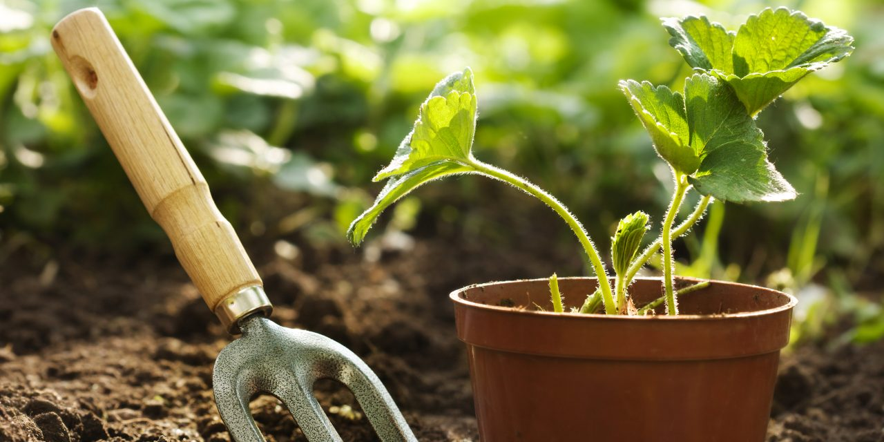 Roots Revival: Plant Heirloom Seeds in Your Veggie Patch This Spring