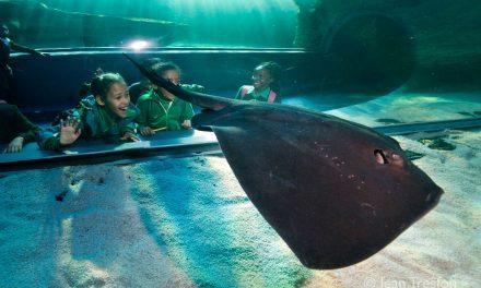 The Two Oceans Aquarium: A Window into the Ocean